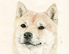 "Check out new work on my @Behance portfolio: ""Shiko"" http://on.be.net/1B8pWKj"
