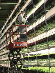 In Newark's Ironbound section, AeroFarms, an indoor agriculture company, is growing salad greens in vertical farms without the use of soil or sunlight. Agriculture Companies, Urban Agriculture, Urban Farming, Indoor Farming, Organic Farming, Hydroponic Gardening, Aquaponics, Vertical Farming, Dream House Exterior