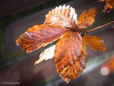 #autumn #autumnleaves #ansterdam#amsterdamphotoclub #igersamsterdam #igers #fall #fallcolors