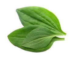 Conoce todos los beneficios curativos que posee esta planta para ti.