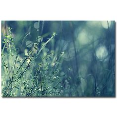 """Found it at Wayfair - """"Blues in the Morning"""" by Beata Czyzowska Young Photographic Print on Wrapped Canvas"""