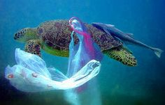 turtle-plastic-bag-under-water-deep-sea-blue-ocean-garbage-trash-ecology-swim-fish-pollution-caught-shell-legs-toes-feet-head-photo