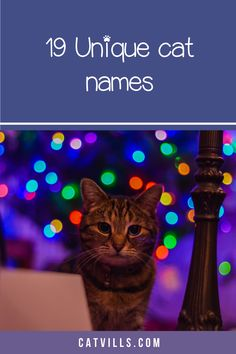 Looking for a clever name for your new cuddly kitty? Check out 19 totally perfect male cat names that we think you'll love! Baby Kittens, Cute Cats And Kittens, Cool Cats, Funny Cat Memes, Funny Cats, Unique Cat Names, Female Names, Outdoor Cats, Cat Behavior