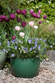 Best Time Plant Tulips | ACHICA Living | Ideas & inspiration for your home, garden & lifestyle ...