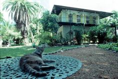 A cat lounging in front of Ernest Hemingway's house