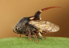 Treehopper by Asher Lwin - Photo 143765847 - 500px