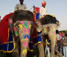 Painted Elephants  Jaipur, India