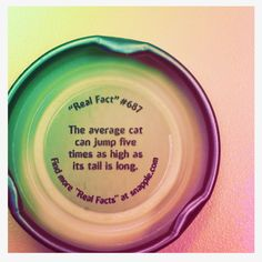 snapple fact #687: cats. And mine do.