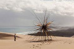 AUTRALIA // Giant Tree Branch Sculpture