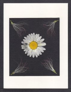 Real Pressed Flower Greeting Card  Note Card by SmileWithFlower, $5.50