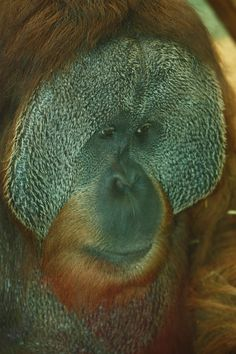 the look of this monkey makes my skin crawl and I love monkeys.
