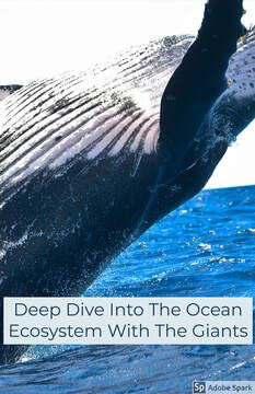 Deep Dive Into The Ocean Ecosystem With The Giants: Free Online Global Website: A Learning Tool About Whales, Interconnected Species & Organisms, Climate Change and Humanity Spiritual Leadership, Ocean Ecosystem, Good Citizen, Learning Tools, Worlds Of Fun, Whales, Dog Owners, Poet, Climate Change