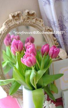 春を告げるピンクのチューリップ / pink tulip **from Richmond Hill, UK**
