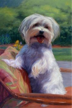 I want a Portrait of My Sweet Girl Bailey~Donn Pastel Portraits, Dog Portraits, Portrait Art, Art For Art Sake, Animal Paintings, Dog Art, Dog Pictures, Cute Drawings, Painting & Drawing