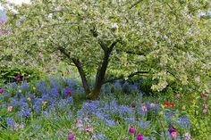 Volker Michael   Focus on Garden - Fine Photography