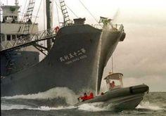 Asda-Walmart has stake in Japanese whaling company.   Greenpeace UK