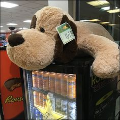 This Jumbo Floppy Dog perches atop a Rockstar® Beverage Cooler, but surely won't bite. How would he get invited to someones home if not happy and loving. Here his mood is neutral as he waits for sh…