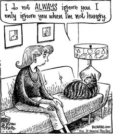 funny cartoons | Funniest Cartoons for Cat Lovers!