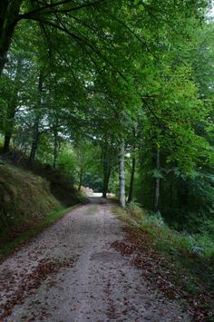 Reserva del Saja, Reinosa #Cantabria #Spain #Travel Costa, Walkways, Spain Travel, Benches, Touring, Woods, Cities, Places To Go, Country Roads