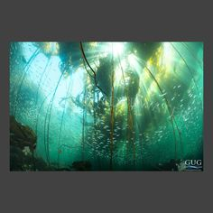 Luxury Line | Gug Underwater