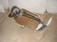 {hot dog doxie} this look never gets old.