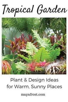 Looking to add a lush, tropical garden to your backyard or outdoor living space? This board features a range of beautiful backyard and sideyard photos of luxuriant tropical folliage in pots, green walls, poolside planters, and even indoor living spaces such as atriums, sunrooms, bathrooms, bedrooms, living rooms, dining rooms, bedrooms and more. Orchids, bromeliads! Have a sheltered corner indoors or outdoors? You can grow tropical plants and add that vacation feeling to your home every day! Planter Boxes, Planters, Tropical Plants, Tropical Gardens, Atrium Garden, Outdoor Box, Garden Plants, Flowering Plants, Plant Design