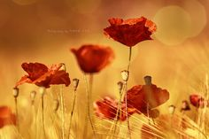 `❉¸•`\¸*|•¸*/¸.•'❀` by Maika Loquetedigalarubia  on 500px