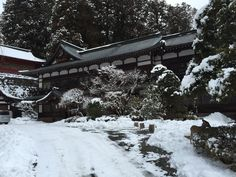 Nikko in the snow
