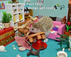 Twenty Incredible Hedgehog Facts That Will Astound You Hedgehog Facts, Baby Hedgehog, Cute Little Animals, Mind Blown, The Twenties, Hedgehogs, Cute Babies, Thinking Of You, The Incredibles