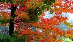 Blätter im November - Jahreszeiten - Galerie - Community
