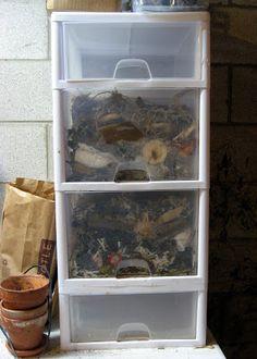 Worm bin made from plastic drawers. Plastic Drawers, Plastic Bins, Worm Farm Diy, Garden Projects, Garden Ideas, Garden Tips, Worm Castings, Plastic Worms, Bokashi