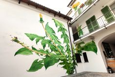 Video: Mona Caron's blooming murals pay homage to resilient weeds