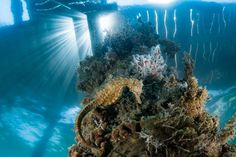 2017 National Geographic Travel Photographer of the Year | National Geographic Ocean Acidification, Ancient Greek Words, Habitat Destruction, National Geographic Travel, Marine Fish, Wildlife Conservation, Sea Monsters, Environmental Issues, Underwater World