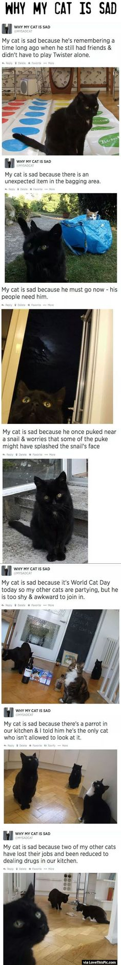 Why My Cat Is Sad cute animals cat cats adorable animal kittens pets kitten funny pictures funny animals funny cats