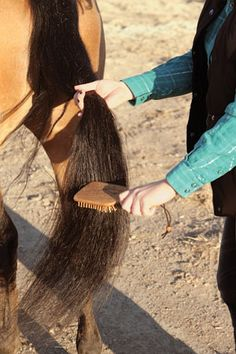 9 Tips for a Long, Lovely Tail HorseandRider.com
