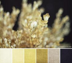 Ok BOOM just found my dining room color palette except more emphasis on the ivory/whiter colors than the darker...
