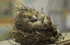 A lazy day ! by johschermer #animals #animal #pet #pets #animales #animallovers #photooftheday #amazing #picoftheday