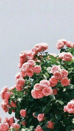 Flower Backgrounds, Flower Wallpaper, Wallpaper Backgrounds, May Flowers, Beautiful Flowers, Floral Flowers, Aesthetic Iphone Wallpaper, Aesthetic Wallpapers, Whatsapp Wallpaper