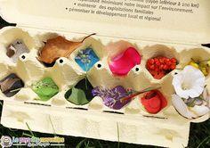 tri couleur boite œufs peinte - Chasse couleurs - montessori