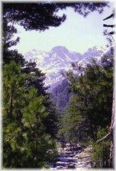 Forêt et gorges de la Restonica