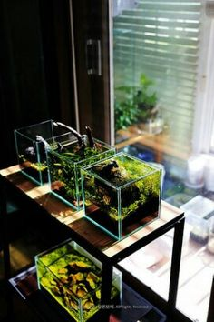 Mini Aquarium by Taeyoon Ki