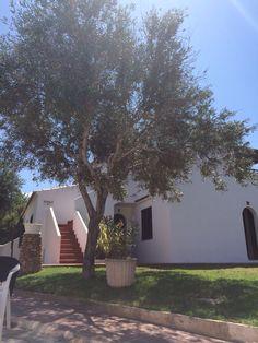 Talayots Apartments in Menorca Menorca, Apartments, To Go, Trees, Holiday, Plants, Vacations, Tree Structure, Holidays