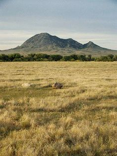 Rising from the prairie just northeast of Sturgis, the summit of this sentinel mountain provides panoramic views of the Black Hills and grasslands. Respect the privacy of Native Americans who frequently gather here -- Bear Butte is a Lakota and Cheyenne holy place.