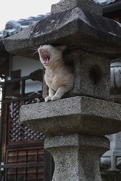 Yawning cat in Japanese stone lantern