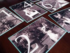 Add photos of the pups for table numbers