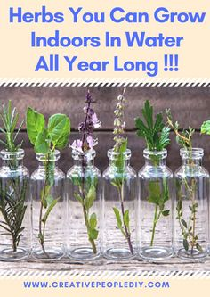 Herbs You Can Grow Indoors In Water All Year Long