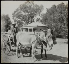 Wilcannia, / photographed by Rev. Australia Country, South Australia, Western Australia, Girls Series, Donkeys, Wilderness, Touring, Vietnam, Ted