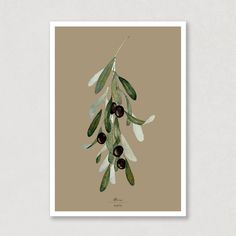 This gorgeous watercolour poster with olives on a branch, reminds me so much of my holidays in Toscana. In this collection of posters, you kan find all images with 6 different backgroundcolours. Which background is your favorit? 😍🖌️ #watercolour #watercolor #olivebranch #posters #art #backgoundcolour #aqva #aqva_watercolours Watercolor Artwork, Watercolor Paper, Muted Colors, Green Colors, All Poster, Posters, Watercolours, Olives, Colorful Backgrounds