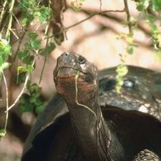 When planning a garden inhabited by tortoises, ensure safe, non-toxic plants are used.