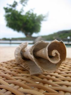 curacao shell from the sea